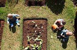 Primetime - Horta   Crianças podem plantar, cuidar, colher e ajudar a preparar o que vão comer.